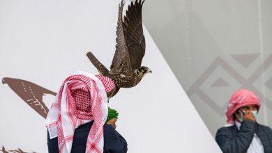 Photo of انطلاق النسخة الثالثة لمهرجان الملك عبدالعزيز للصقور