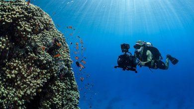 Photo of شاهد .. نيوم تعلن اكتشاف كائنات بحرية عملاقة ونادرة وجزر جديدة في شمال البحر الأحمر